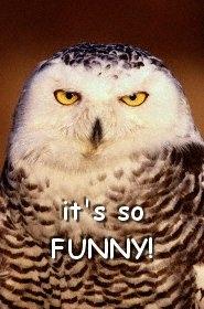 du bist nicht lustig